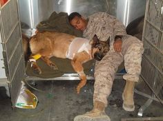 MWD Lucca K458 recovering from amputation of her front left leg,with Marine Cpl Juan Rodriguez who was her last handler, and saved her life...