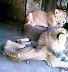 The heartbreaking picture that launched a Lion's Heart.