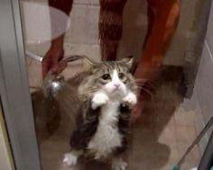 Poor kitty! Puss minus the Boots. haah