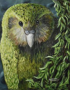 Choose your favorite kakapo paintings from millions of available designs. All kakapo paintings ship within 48 hours and include a money-back guarantee. Beautiful Birds, Animals Beautiful, Cute Animals, Kakapo Parrot, Parrot Painting, Nz Art, Decorative Bird Houses, Crazy Bird, Wildlife Paintings