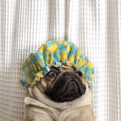 """When ur in the shower and think u hear someone in ur house"" -Doug the Pug"