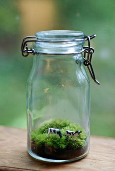 10 Fun and Easy Terrarium Projects. Fun Tips, Tricks, Terrarium plants and tutorials for easy terrarium projects. Mini Terrarium, Terrarium Plants, Succulent Terrarium, Moss Garden, Garden Plants, Indoor Plants, House Plants, Container Gardening, Succulents