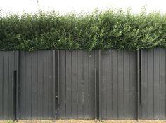 Dark fence and olive tree hedge