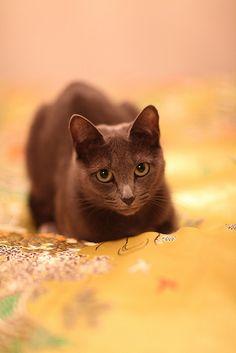 Tigrusha  (^_^)kitty(^_^)