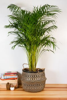 New Living Room, Living Room Decor, Bedroom Decor, Patio Plants, House Plants, Chill Out Room, Safari Bedroom, Seagrass Storage Baskets, Cheese Plant