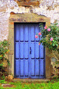 purple door pink roses