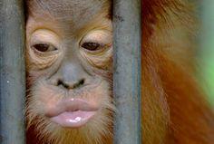 Gokong - Do you LOVE me? http://redapes.org/babyhouse  Photo Craig Jones