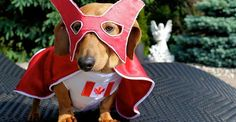 "Rusty thrives — nay, conquers — Canadian winters. He also ""can sport a toque like nobody's business,"" his owner Terri tells BuzzFeed. 