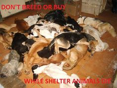 DOGS FOR ADOPTION | Dog Rescue | Cat Rescue | Derby | Animal | Charity | Second Chance Rescue Kennels