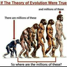 If the theory of evolution were true...