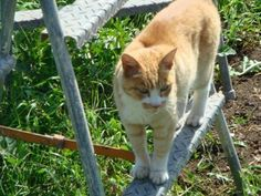 うちの猫くん お外大好きです。