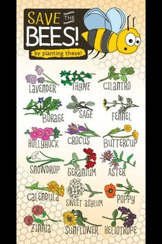 Plants these to save the bees