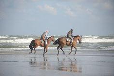 normandymylove:  DEAUVILLE Chevaux sur la plage