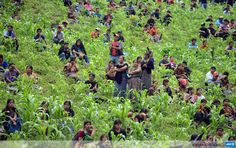 GUATEMALA, SAN JUAN SACATEPEQUEZ: Peasants and natives of the municipality San Juan Sacatepequez, 30km west of Guatemala City, protest against the inauguration of a cement factory in the area arguing the plant will damage the environment, on July 19, 2013. AFP PHOTO/Johan ORDONEZ