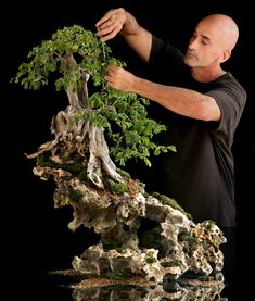 A bonsai garden can give peace and relaxation to everyone in the family. All the effort required to develop and prune a bonsai can make it into a superb shaped tree that. Bonsai Forest, Bonsai Garden, Garden Trees, Bonsai Trees, Bonsai Pruning, Succulents Garden, Ikebana, Plantas Bonsai, Beautiful Photos Of Nature