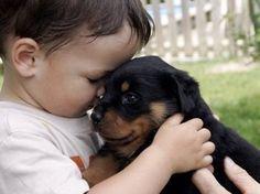 Conviver com cães evita infecções em bebês, diz estudo