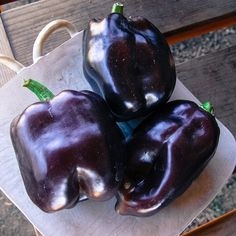 "Purple Beauty or ""Purple Bell"" Pepper Seeds - Sweet Bell PepperOne of the best variety of purple peppers, Purple Beauty is highly productive and will produce crisp fruits with thick flesh. Delicious and beautiful, it will add colors to your salads. Sweet Bell Peppers, Stuffed Sweet Peppers, Purple Bell Pepper, Capsicum Annuum, Veg Garden, Porch Garden, Garden Seeds, Garden Plants, Pepper Plants"