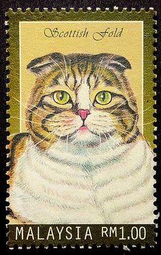 Scottish fold cat -Framed Postage Stamp Art 17476