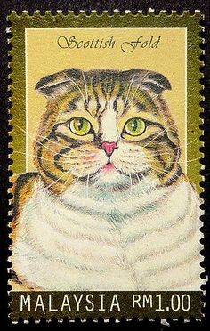 Scottish fold cat -Framed Postage Stamp Art 17476