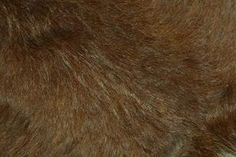 How to Preserve a Fur With Just Borax thumbnail