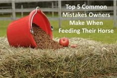 Top Five Mistakes When Feeding your Horse