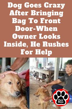 This dog is a true hero! Talking Animals, Funny Animals, Beautiful Love, Animals Beautiful, Bull Mastiff Puppies, Horse Dance, Crazy Dog Lady, Dog Stories, Going Crazy