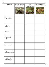 Játékos tanulás és kreativitás: A mező rovarvilágáról tanulunk