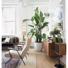 TUESDAY: NATURAL #adailyvignette#natural#style#styling#design#decor#inspiration#interior#livingroom#naturalstyle#naturaldecor#plantlife#pottedplants#bananapalm#bananaplant#plantlife#vintagestyle#naturallight#cleanair