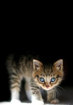 A kitten stood half hidden in the shadow staring wide eyed at the world around it, including the approaching humans from the rescue center.