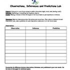 protist dichotomous key worksheet activity Biology and