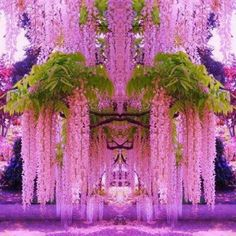 Purple Wisteria, Japan