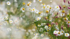 Summer, Flowers, Nature
