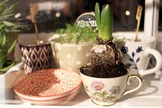Plant in Old Coffee Cup