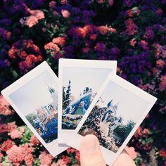 took polaroids of fof today!