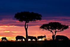 Top 5 Places I want to go to next - Africa.