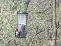 Pretty birds. Pretty Birds, Bird Feeders, Wildlife, Cottage, Outdoor Decor, Beautiful Birds, Casa De Campo, Cottages, Cabin
