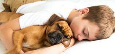 How Sleeping with Your Pet Enhances Your Sleep Quality Read here - https://goo.gl/E7sgU7