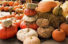 """Great Pumpkins"" by Kristina Austin Scarcelli."