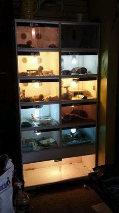 Reptile Enclosures