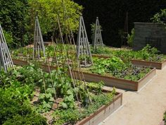 The Ultimate Kitchen Garden, Courtesy of a California Master Gardenista