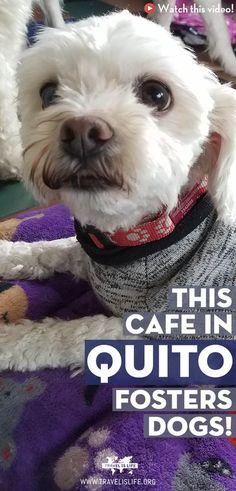This cafe in Quito fosters dogs! South America Map, South America Destinations, Central America, Travel Destinations, Latin America, Holiday Destinations, Travel Advice, Travel Guides, Travel Articles