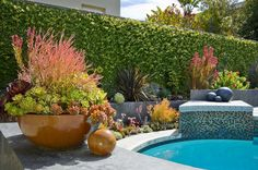 By the Pool: ceramic pots & succulents