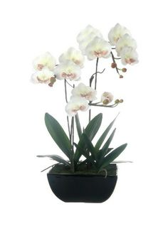 A Loja do Gato Preto   Vaso Quadrado Orquídea Branca @ Maceta Cuadrada Orquídea Branca #alojadogatopreto
