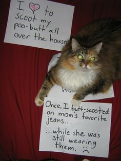 LMAO Image detail for -pet shaming | Tumblr