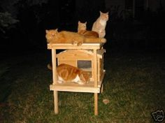 Outdoor Cat Shelter has provided shelter for these unfortunate feral cats. The owner of the property on which this Outdoor Cat Shelter is installed does not own any cats - he is allergic to cat hair - Outside Cat Shelter, Outside Cat House, Outdoor Cat Shelter, Cats Outside, Outdoor Cats, Heated Cat House, Heated Outdoor Cat House, Feral Cat House, Feral Cats