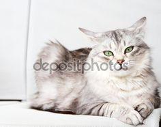 Check out this #image on @depositphotos  #pet #katze #gatos #gorgeouscats #cat #adorablecats #chat