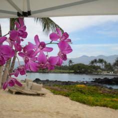 Tu, de vacaciones!!  Y tus orquídeas?