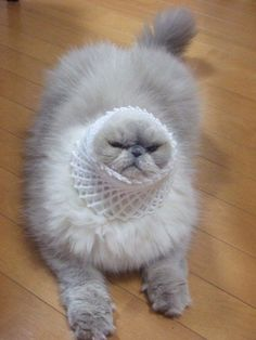 funny, funny pictures, funny photos, funny cats, caturday, cat