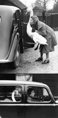 Taxi Kuğulu