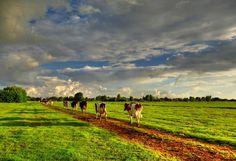 Achter elkaar aan met de stal in zicht